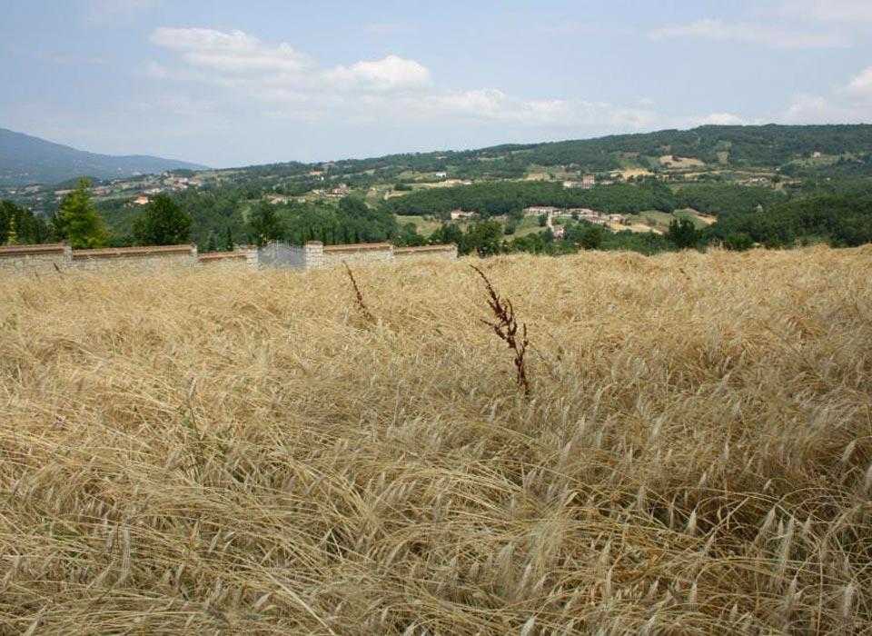 agriturismo_di_fiore_azienda_agricola